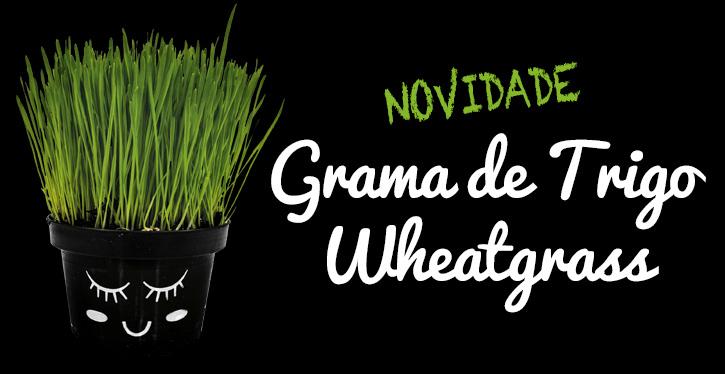 grama de trigo